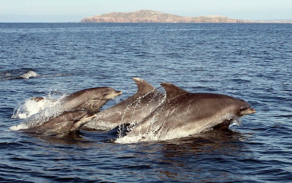 Arranmore Island Dolphins - Copyright John Rafferty Photography 0868320007