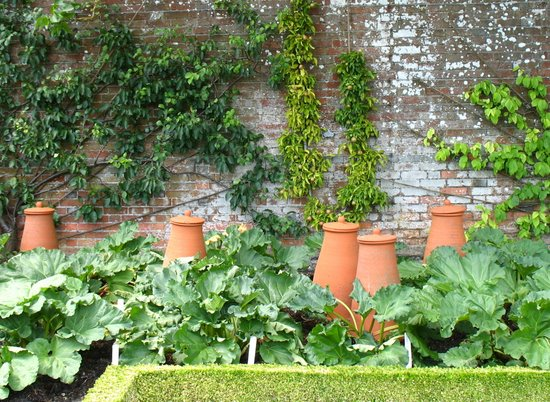 Rhubarb forcing pots in West Dean Gardens