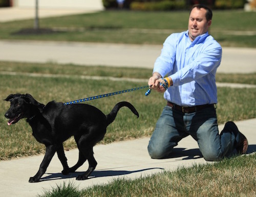 There are simple ways to stop your dog pulling on its lead.