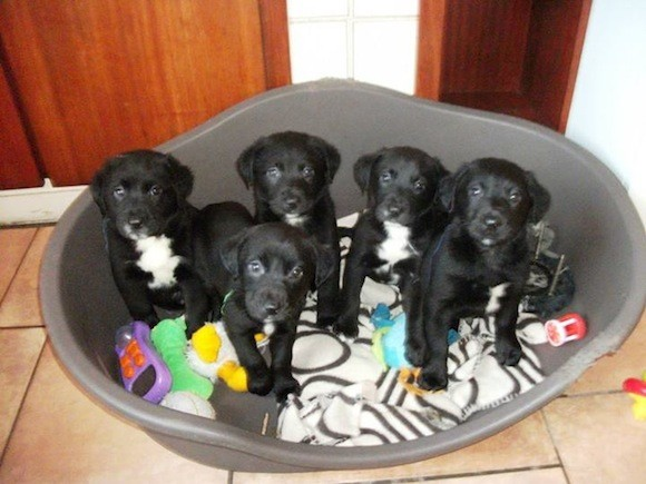 The pups are fit and healthy today after being dumped to die just a month ago.