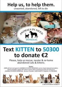 Abandoned Kitten Appeal
