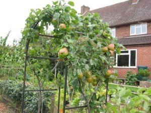 Or why not tackle an apple archway?