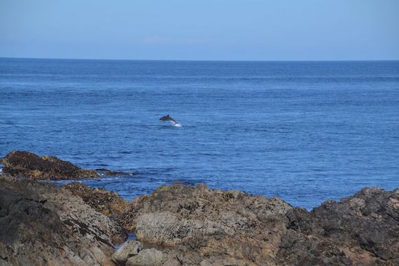 Some of the dolphins of Malin Head.