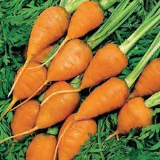 Chantaney Carrots