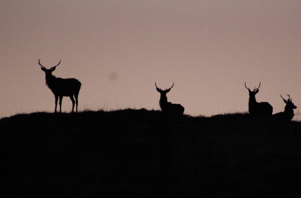 Red Deer sunse